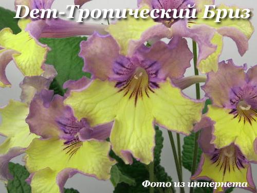Dem-Тропический Бриз (Д.Демченко)