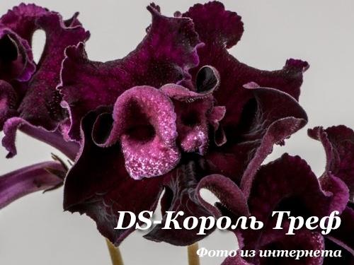 DS-Король Треф (П.Еникеев)