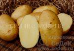 kartofel-kolette
