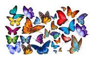 Вафельные БАБОЧКИ ДВУХСТОРОННИЕ цветные с рисунком  10шт/уп