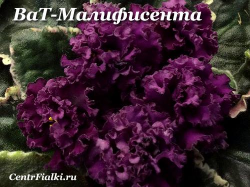 ВаТ-Малифисента (Валькова)  НОВИНКА