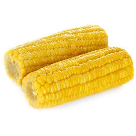 Кукуруза отварная в початках