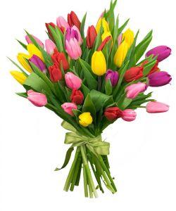 Тюльпаны букет 31шт в ассортименте