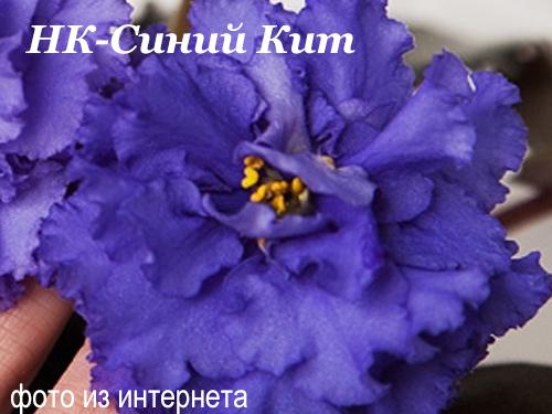 НК-Синий Кит (Н.Козак)