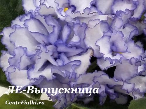 ЛЕ-Выпускница (Е.Лебецкая)