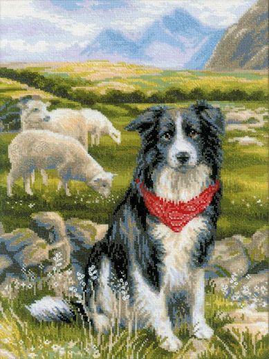 Набор для вышивания крестом Бордер-колли №1767 фирма Риолис