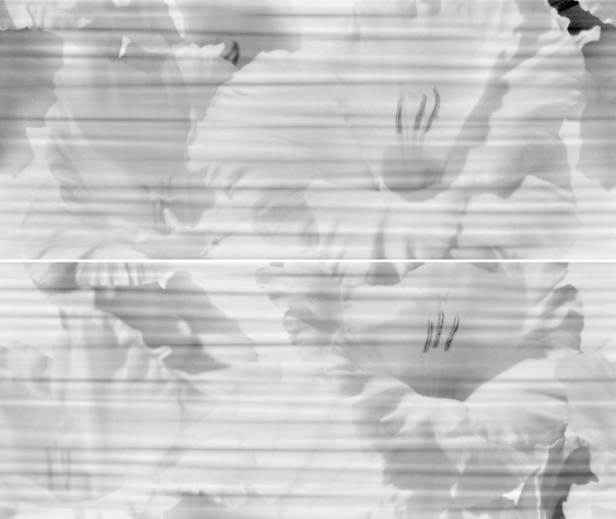 Celia white panno 01