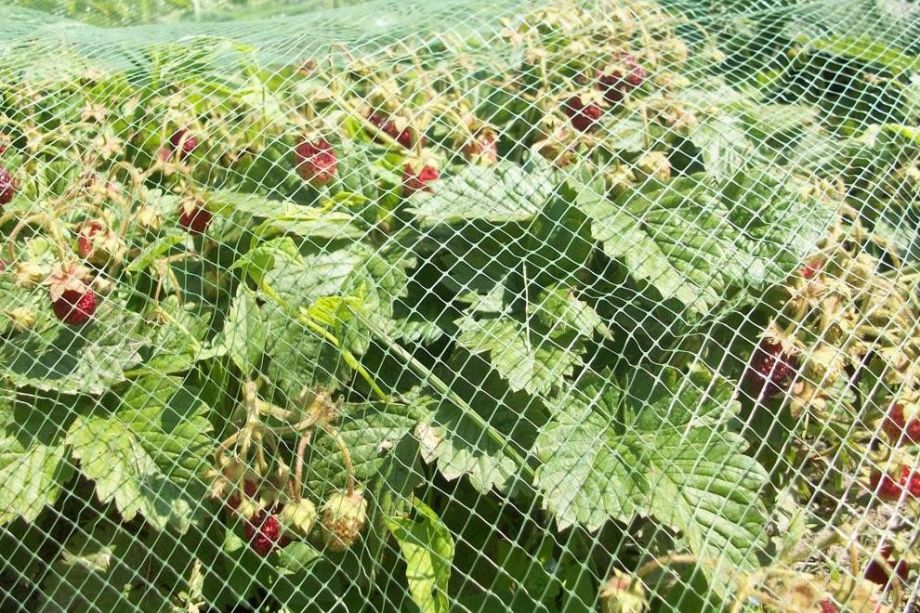 Сетка от птиц для защиты ягод и овощей, размер 2х10 м