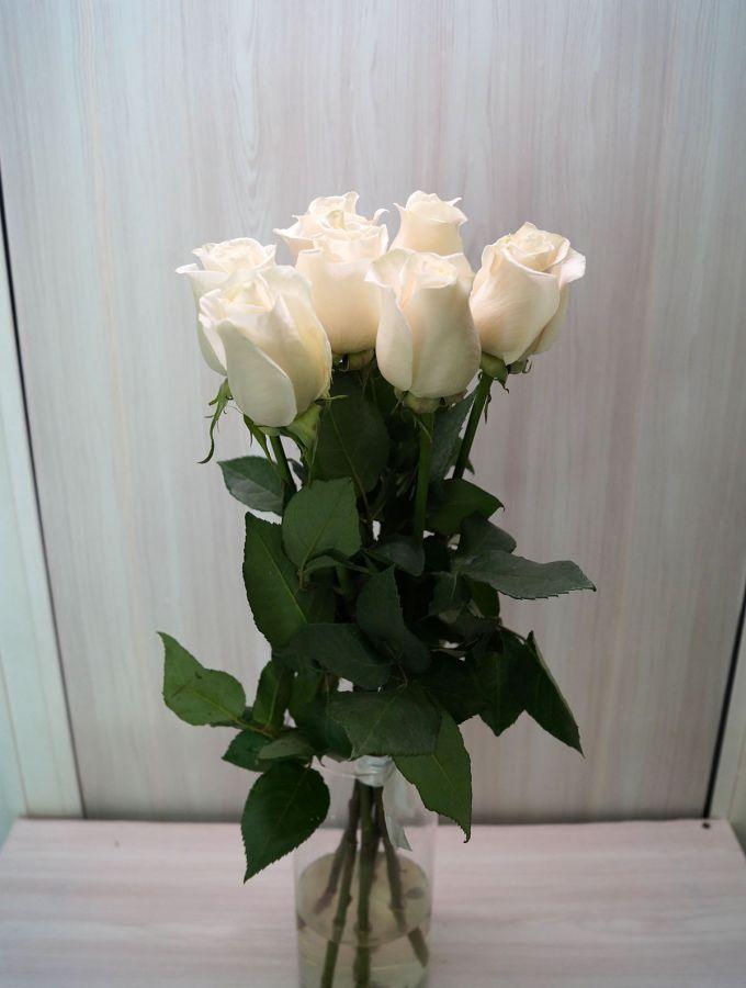 7 роз - Венделла (60 см)