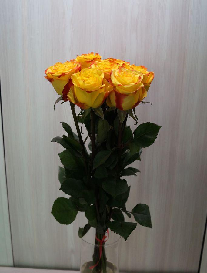 7 роз - Хай еллоу (60 см)
