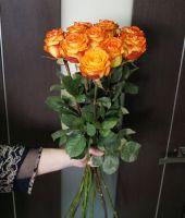 11 роз - Хай меджик (60 см)