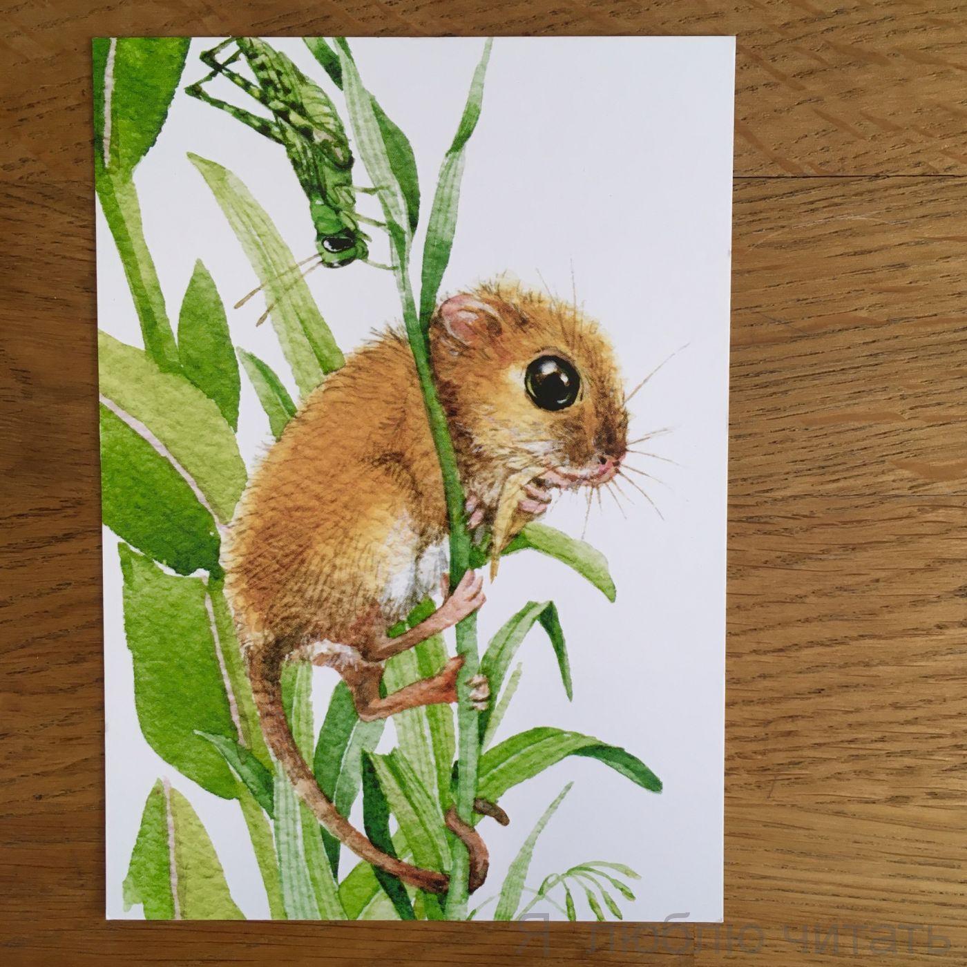Открытка «Мышь-малютка»