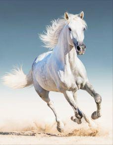 Алмазная мозаика «Белая лошадь» 40x50 см