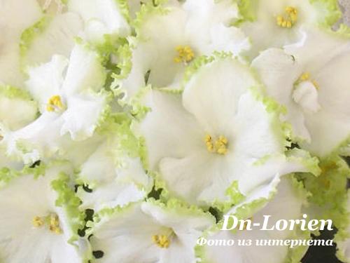 Dn-Lorien