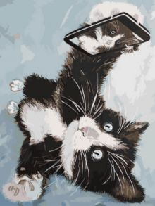 Картина по номерам «Котенок делает селфи» 30x40 см
