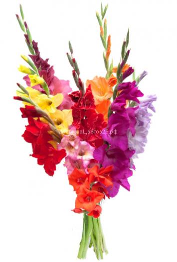 Букет из разноцветных гладиолусов