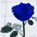 "Роза в колбе синяя 33 см ""Lux"""