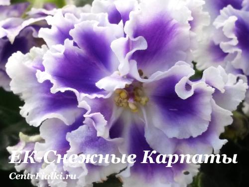 ЕК-Снежные Карпаты (Е.Коршунова)