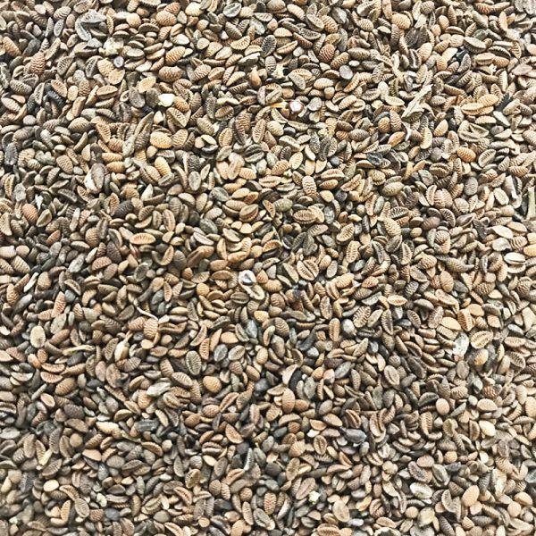 Семена фацелии (1 кг), урожай 2020