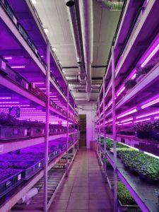 Фитолампа для растений линейная VA-3 60 см