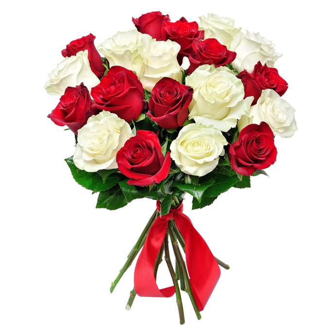 Розы красные и белые от 11шт  60 см Кения