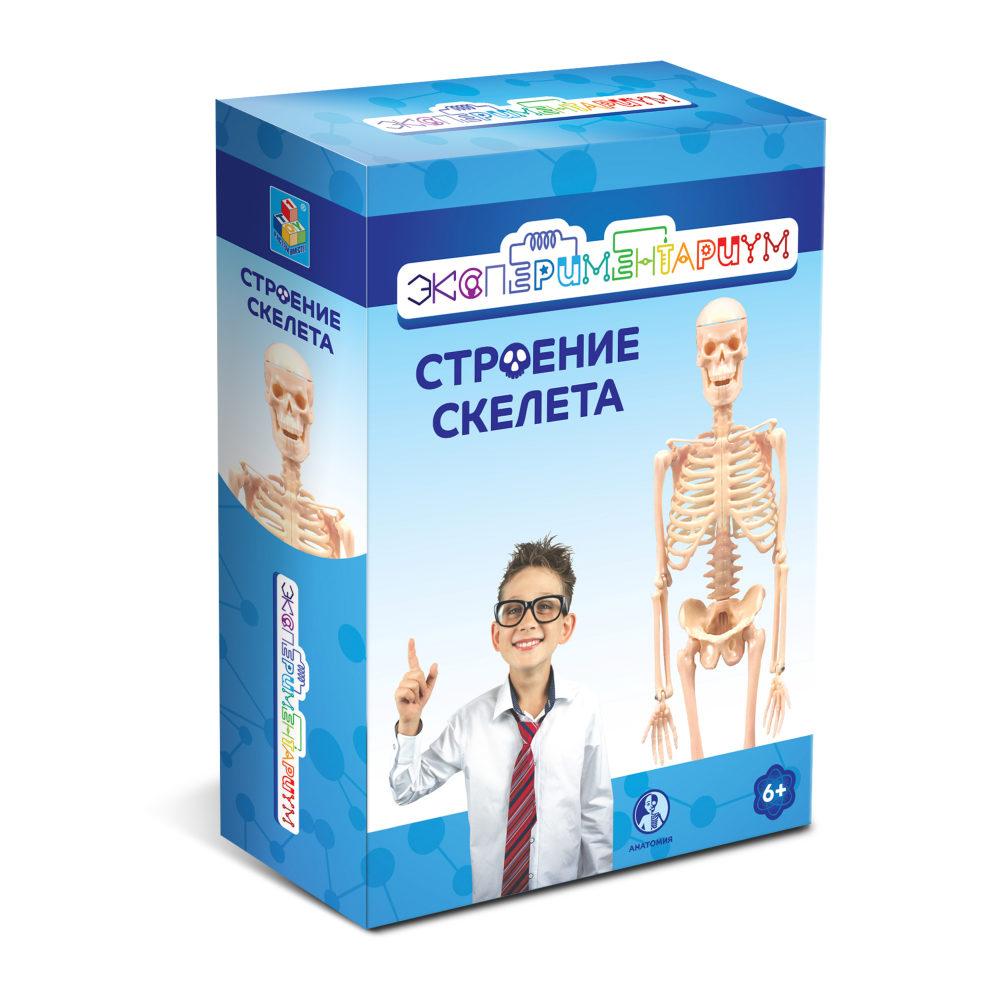 ЭКСПЕРИМЕНТАРИУМ Набор Строение скелета