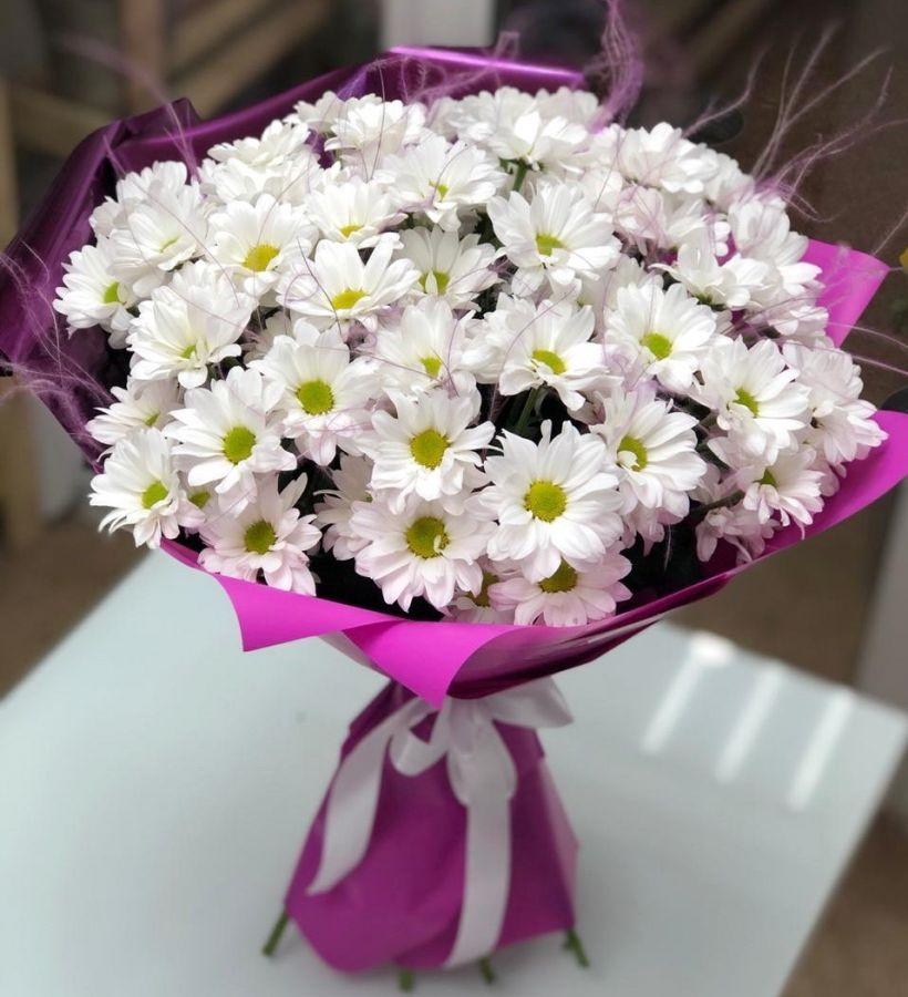 9 хризантем бакарди со стифой в красивой упаковке