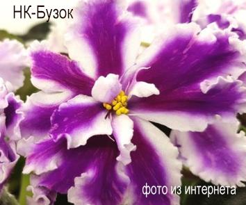НК-Бузок (Н.Козак)