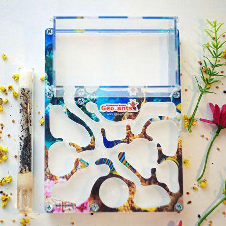 """ჭიანჭველების ფერმა Geo-ants """"Coral Reef"""" 19х14 სმ"""