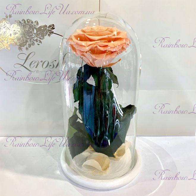 """Стабилизированная роза в колбе 27 см персиковая """"Premium"""""""