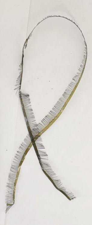 Лакоткань морская капуста