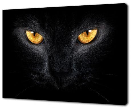 Картина на холсте Кошачий взгляд