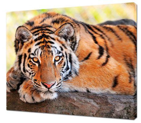 Картина на холсте Взгляд тигра