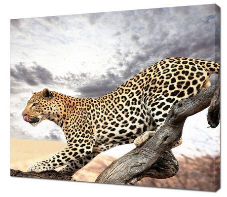 Картина на холсте Грация гепарда