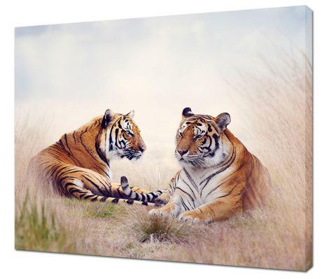 Картина на холсте Два тигра