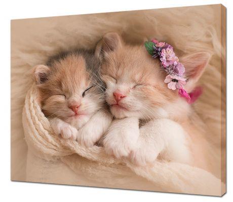 Картина на холсте Два котенка