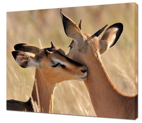 Картина на холсте Животная любовь