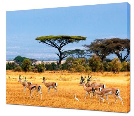Картина на холсте Саванна