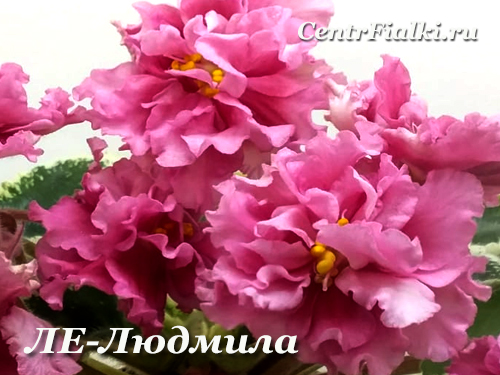 ЛЕ-Людмила (Е.Лебецкая)