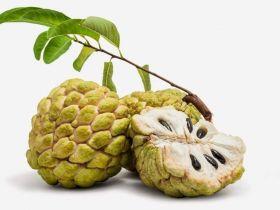 Энзимный фруктовый концентрат с моющими свойствами (замена ПАВам, в том числе и зеленым)
