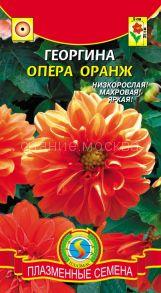 Георгина Опера оранж (плазмас)