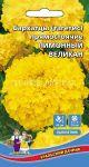 Barhatcy-Limonnyj-velikan-Uralskij-dachnik