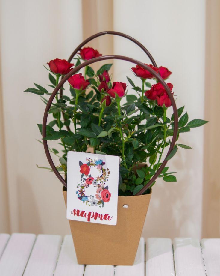 Роза Гранд Кордана Красная Д-12 (праздничное оформление)