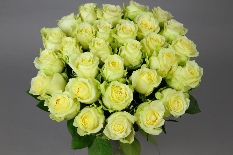 51 Белая Роза Кения 60 см