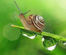 Snailine-Муцин улитки 30 гр