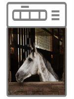 Наклейка на посудомоечную и стиральную машину  - Лошадь