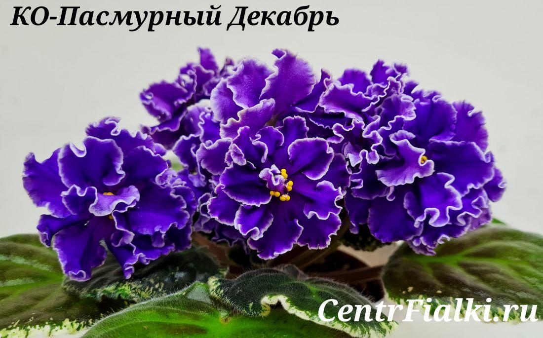 КО-Пасмурный Декабрь (О.Кособокова)