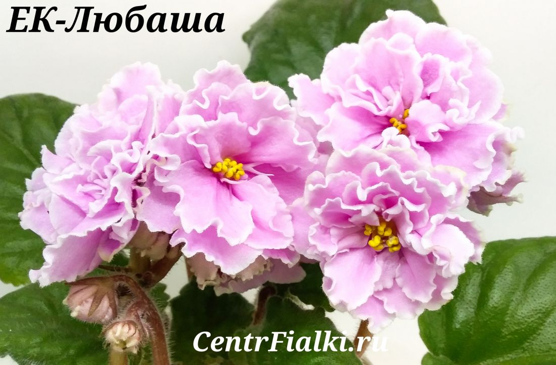 ЕК-Любаша (Е. Коршунова)
