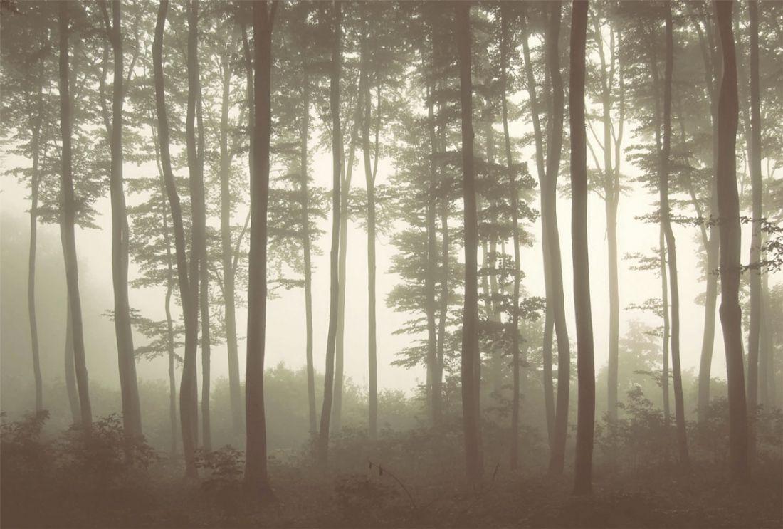 Mystic Fog Sepia