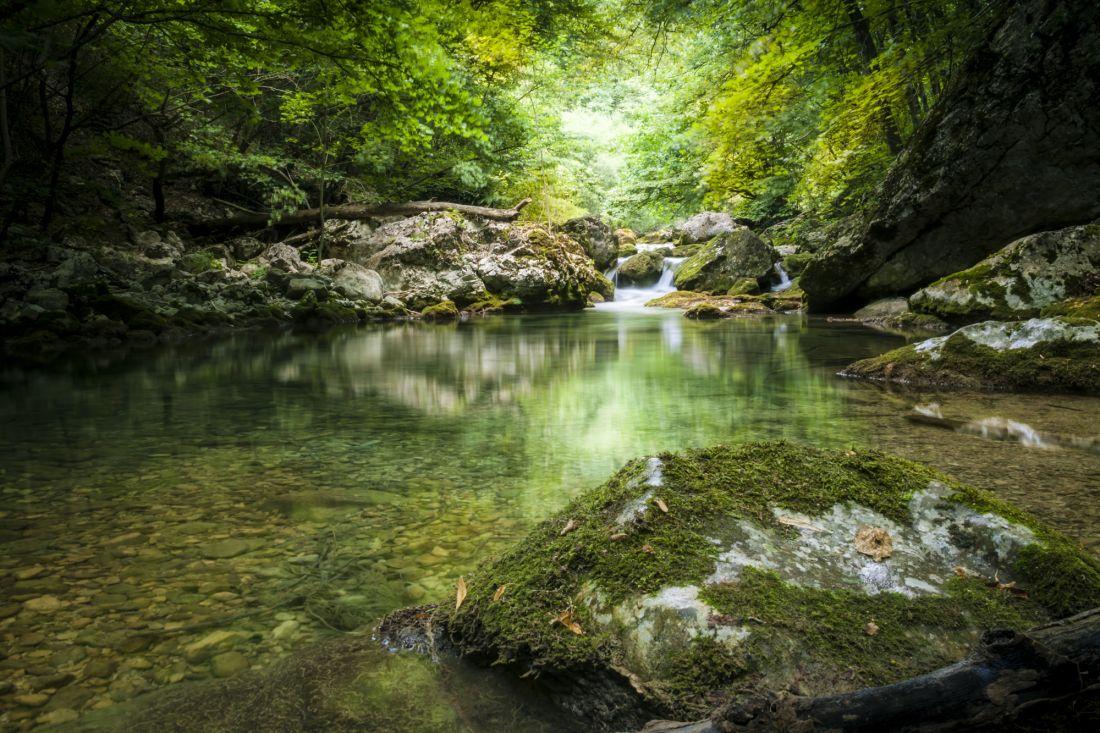 Речка в лесу 1087
